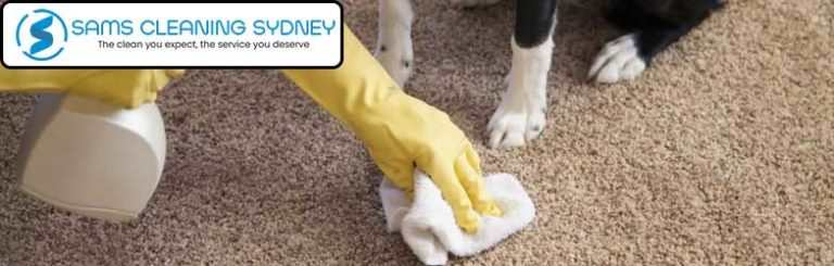 Pet Related Damage Carpet Repairing