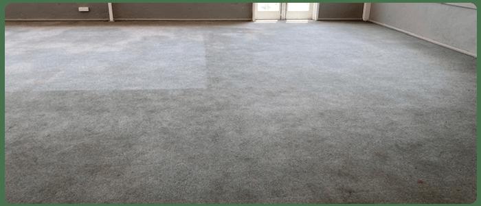 Keep your Carpet Clean